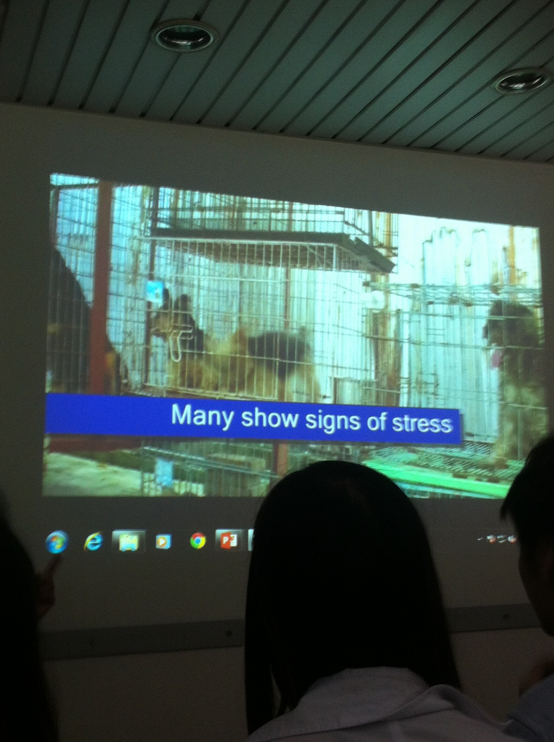 A slide from a case study about bad breeders and puppy mills.