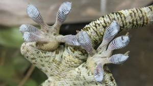 Gecko Feet!