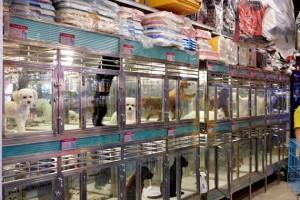 Pet Shops HK